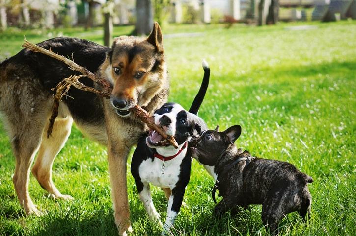 Comparateur mutuelle chien